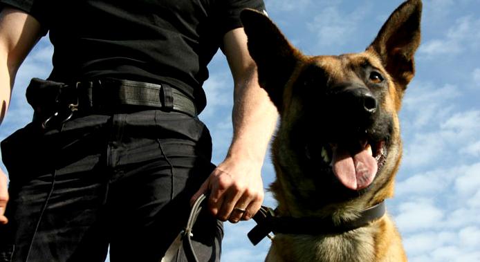 Segurança patrimonial com cães de guarda